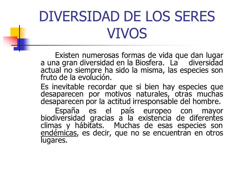 DIVERSIDAD DE LOS SERES VIVOS
