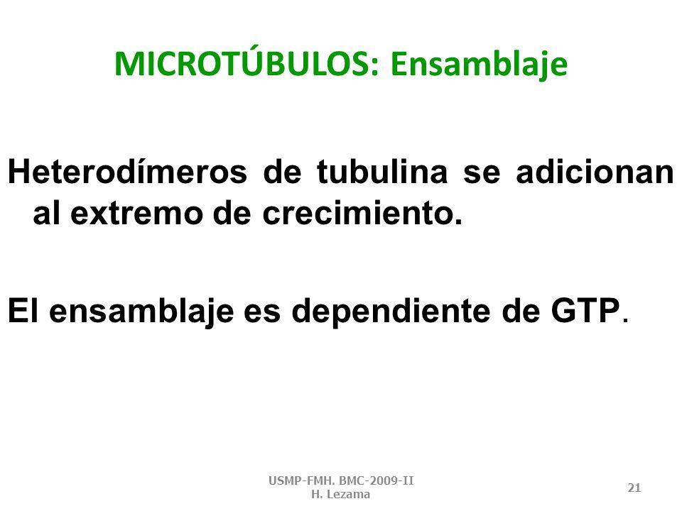 MICROTÚBULOS: Ensamblaje