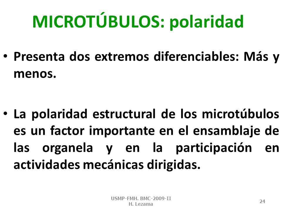 MICROTÚBULOS: polaridad