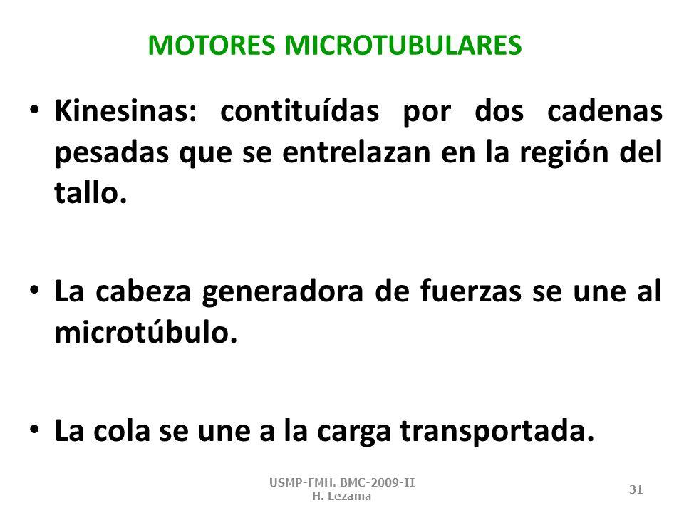MOTORES MICROTUBULARES