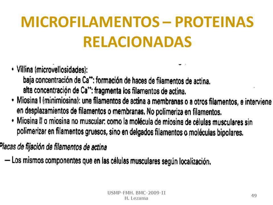 MICROFILAMENTOS – PROTEINAS RELACIONADAS