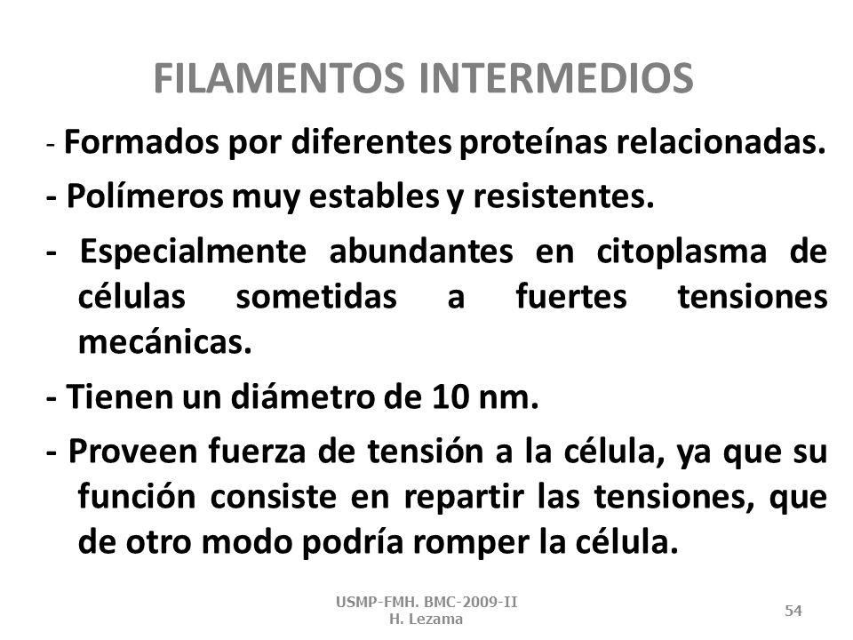 FILAMENTOS INTERMEDIOS