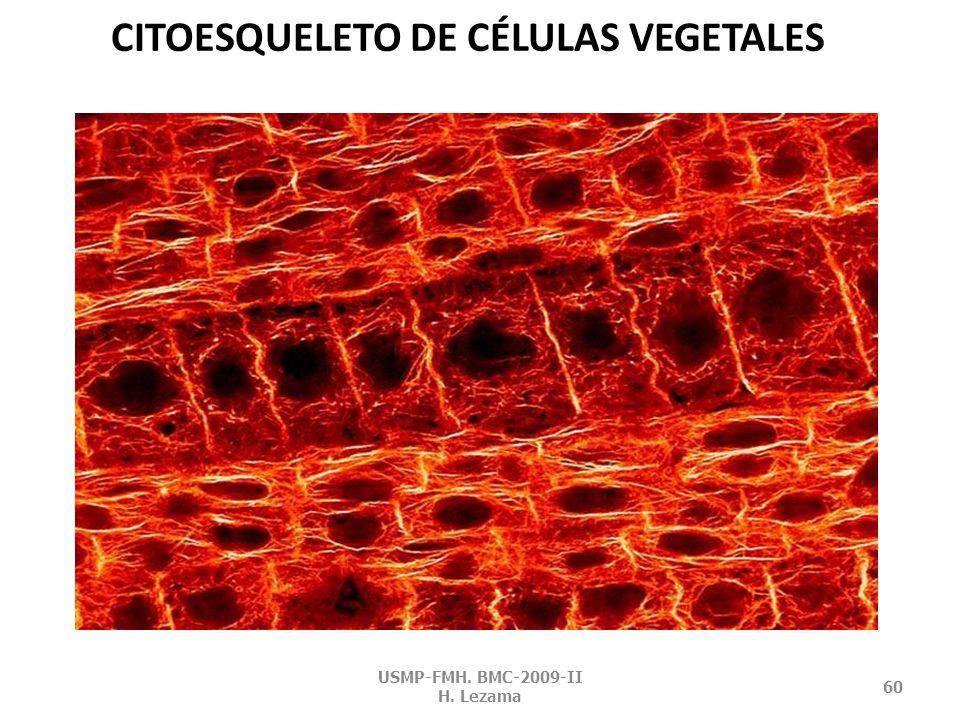 CITOESQUELETO DE CÉLULAS VEGETALES