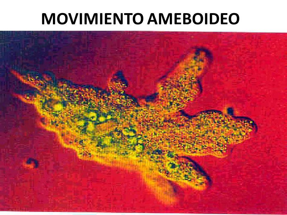 USMP-FMH. BMC-2009-II H. Lezama
