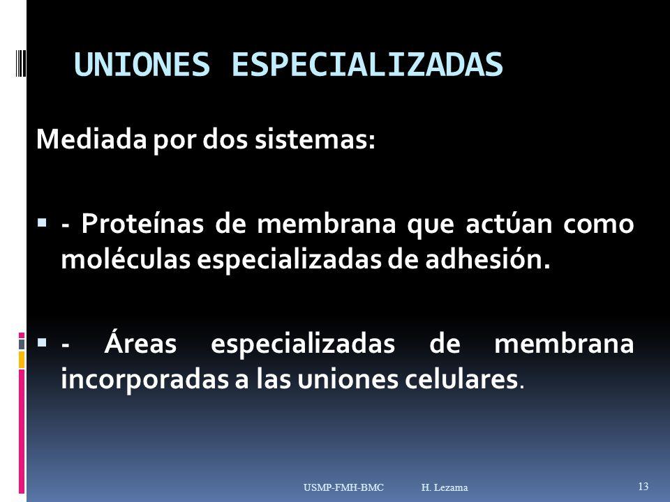 UNIONES ESPECIALIZADAS