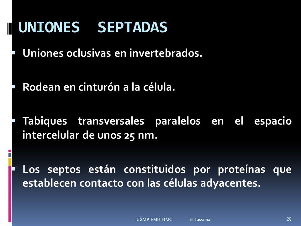 UNIONES SEPTADAS Uniones oclusivas en invertebrados.