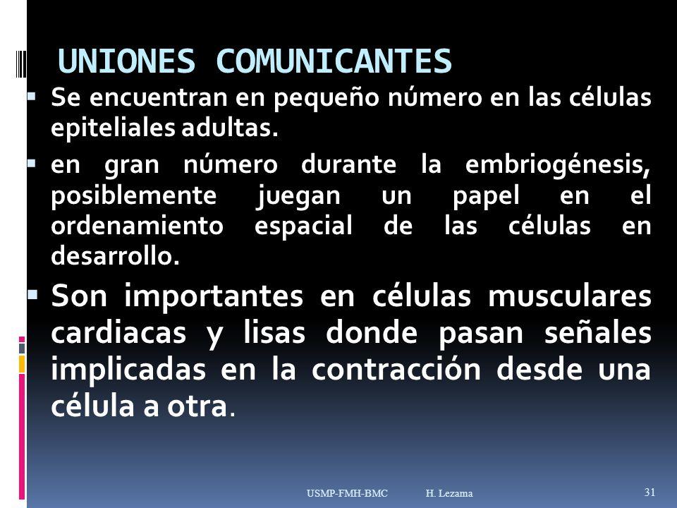 UNIONES COMUNICANTES Se encuentran en pequeño número en las células epiteliales adultas.