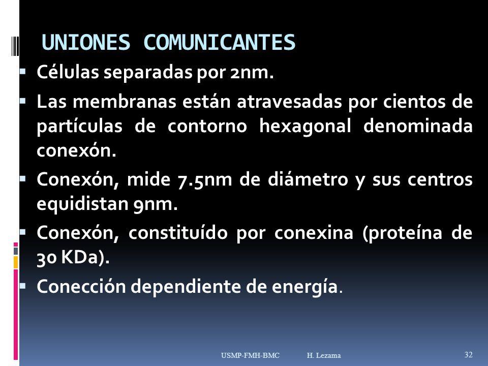 UNIONES COMUNICANTES Células separadas por 2nm.