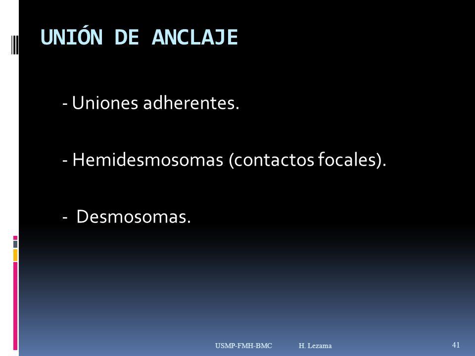 UNIÓN DE ANCLAJE - Uniones adherentes. - Hemidesmosomas (contactos focales).