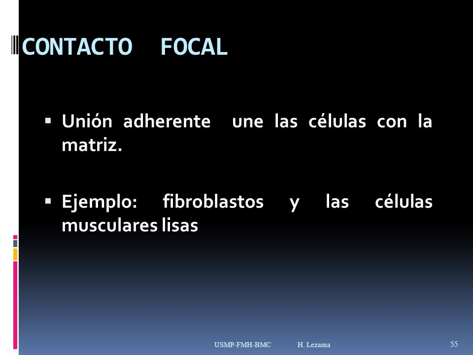 CONTACTO FOCAL Unión adherente une las células con la matriz.