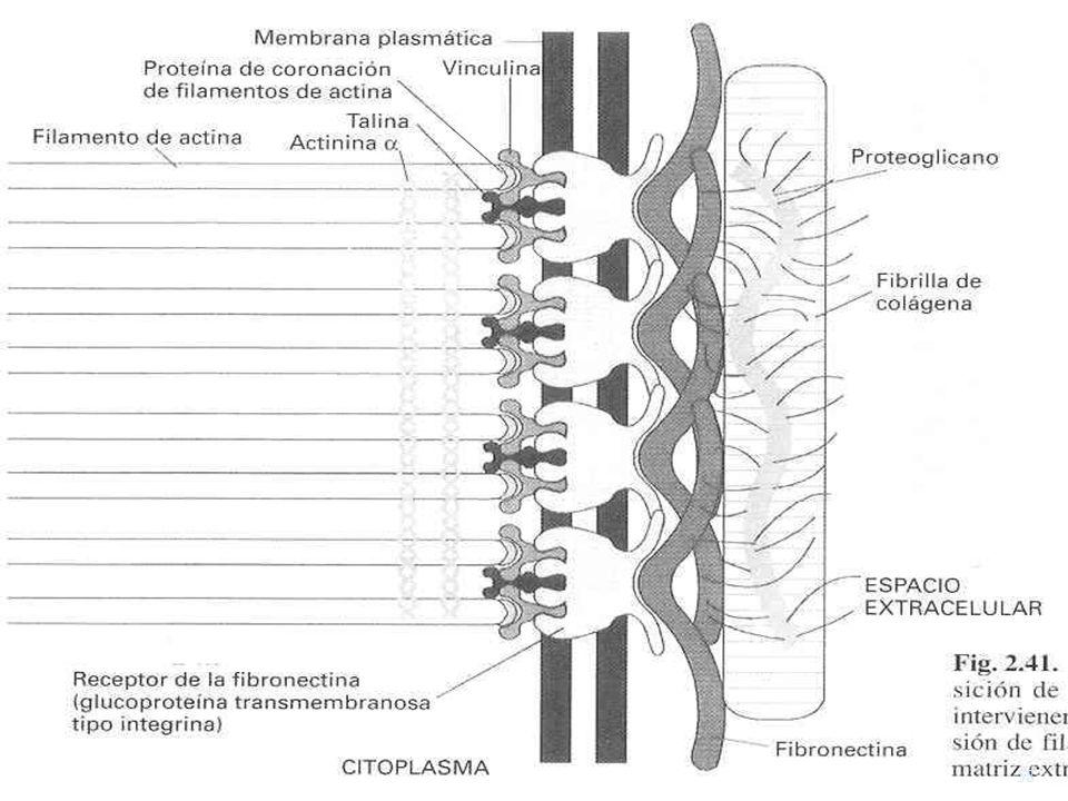 Contactos focales USMP-FMH-BMC H. Lezama
