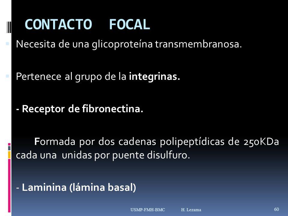 CONTACTO FOCAL Necesita de una glicoproteína transmembranosa.