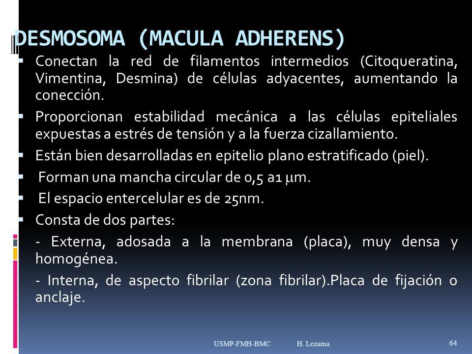 DESMOSOMA (MACULA ADHERENS)