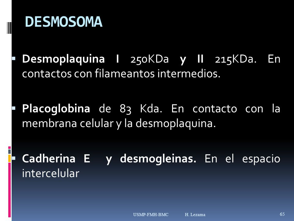 DESMOSOMA Desmoplaquina I 250KDa y II 215KDa. En contactos con filameantos intermedios.