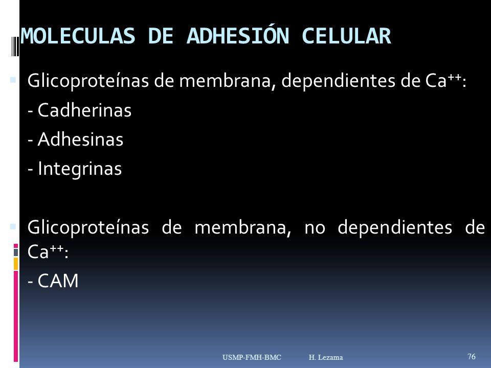 MOLECULAS DE ADHESIÓN CELULAR