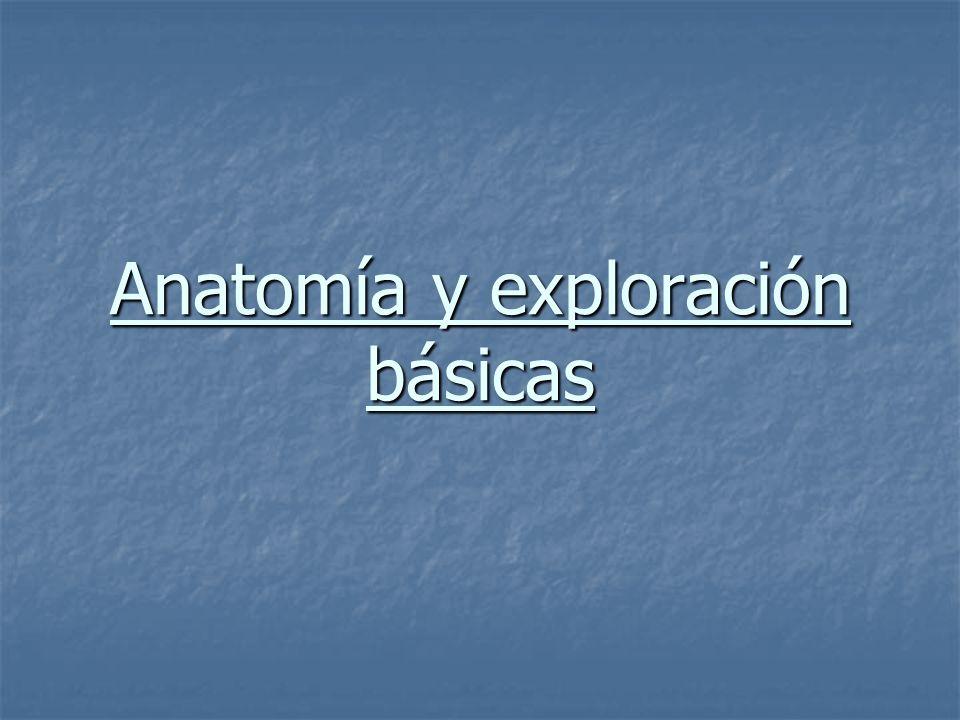 Anatomía y exploración básicas