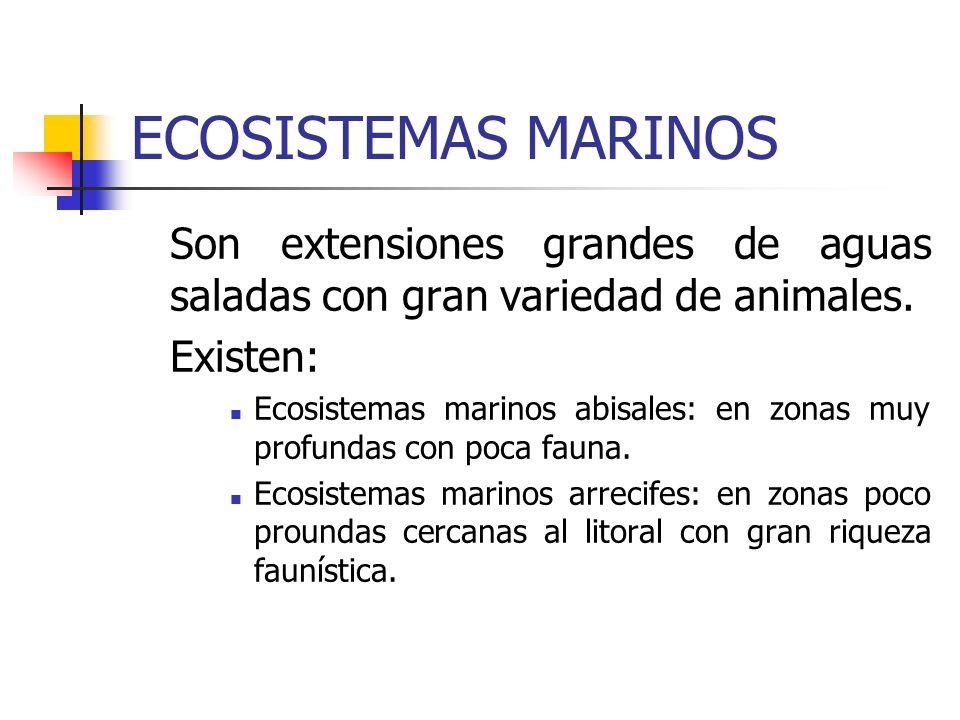 ECOSISTEMAS MARINOS Son extensiones grandes de aguas saladas con gran variedad de animales. Existen: