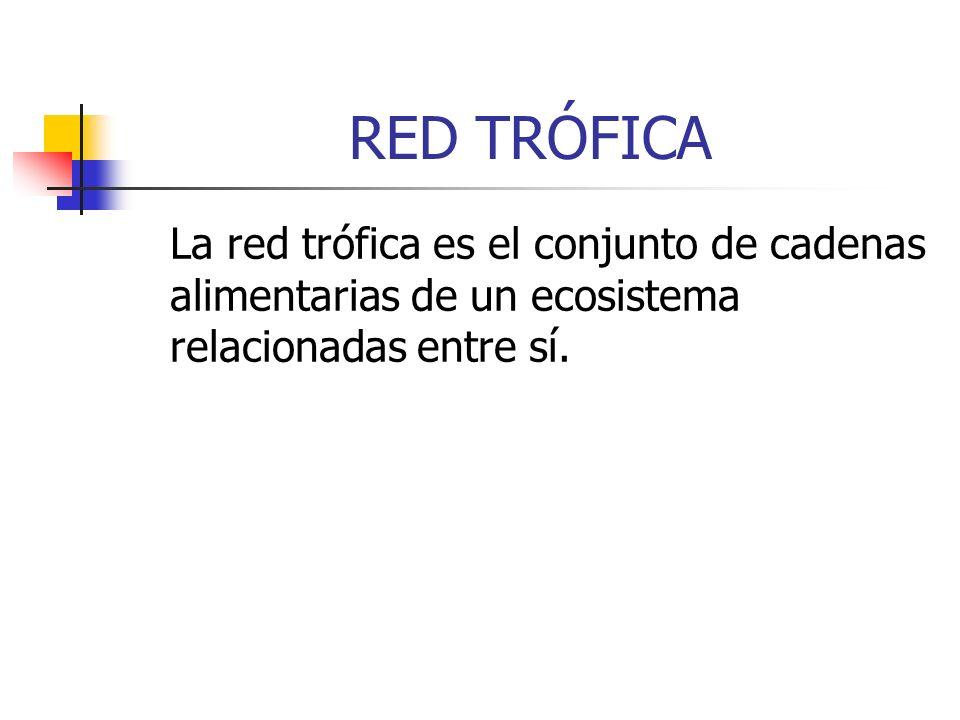RED TRÓFICA La red trófica es el conjunto de cadenas alimentarias de un ecosistema relacionadas entre sí.