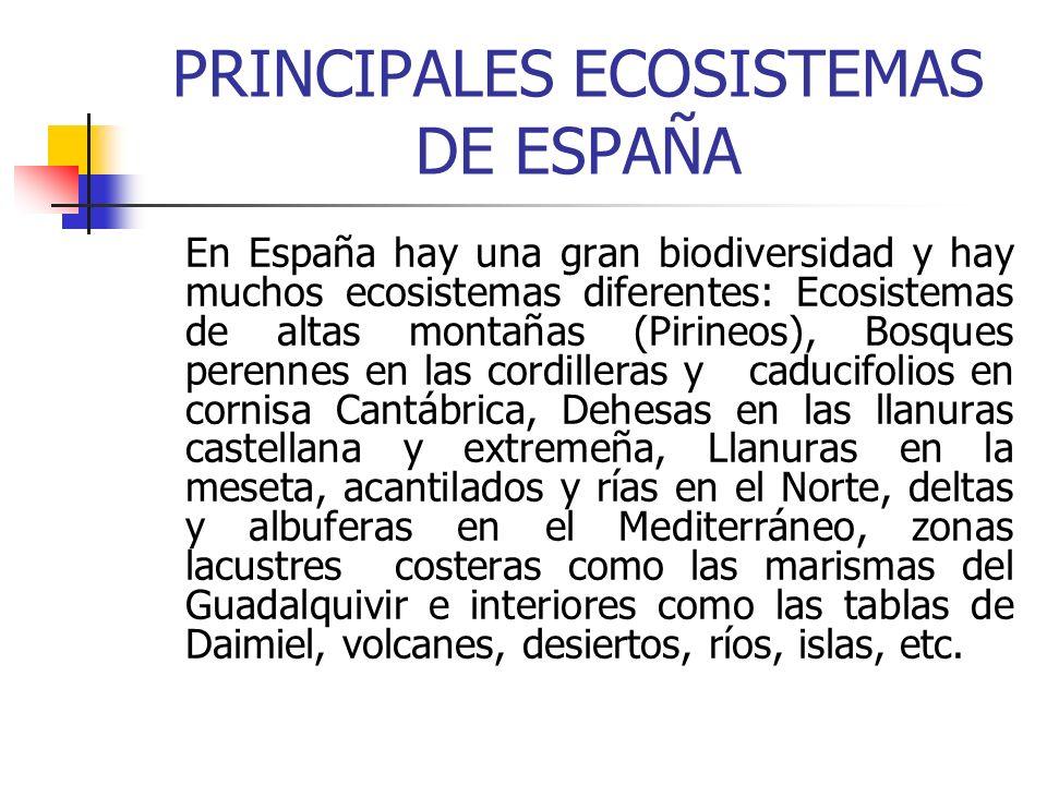PRINCIPALES ECOSISTEMAS DE ESPAÑA