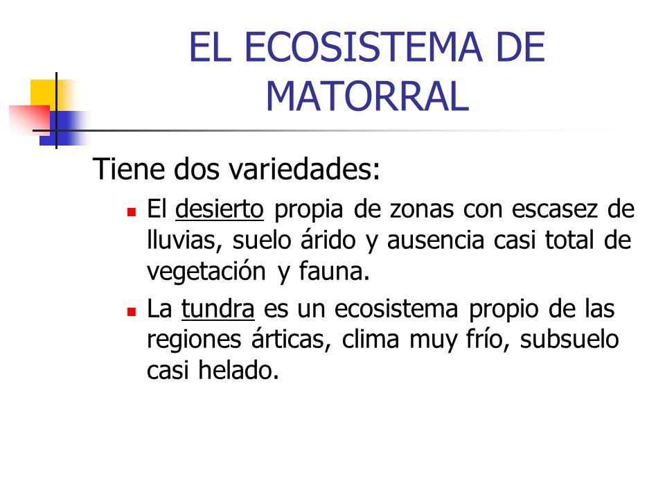 EL ECOSISTEMA DE MATORRAL