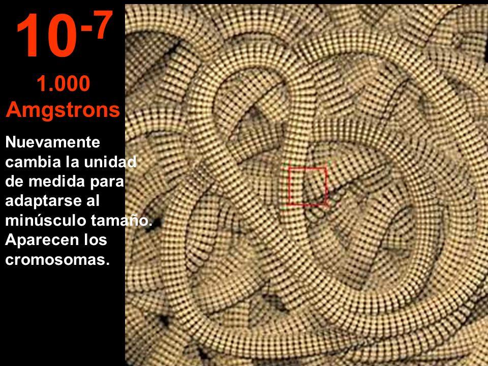 10-7 1.000 Amgstrons. Nuevamente cambia la unidad de medida para adaptarse al minúsculo tamaño.