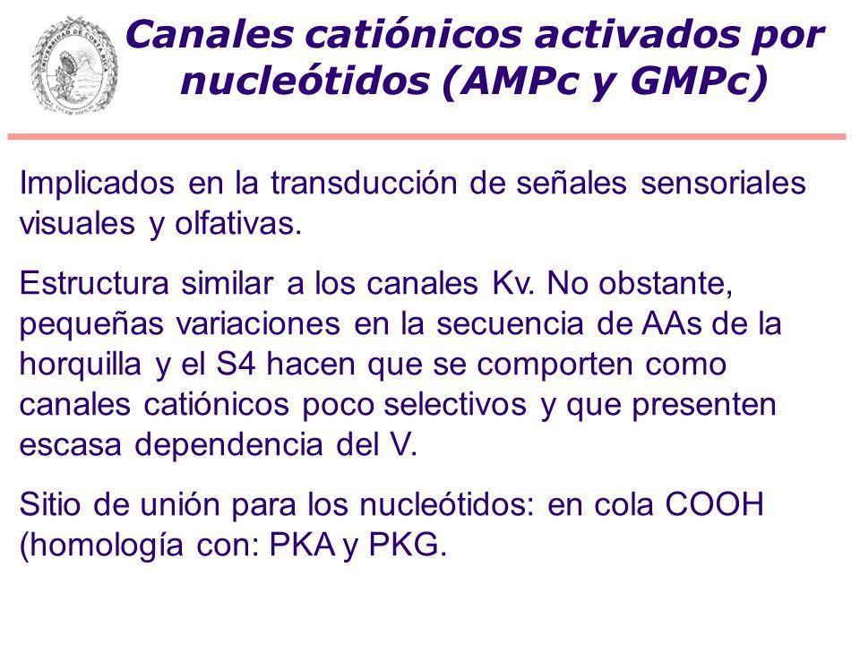 Canales catiónicos activados por nucleótidos (AMPc y GMPc)
