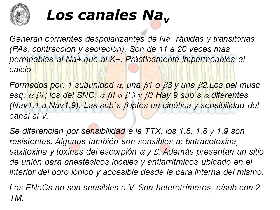 Los canales Nav