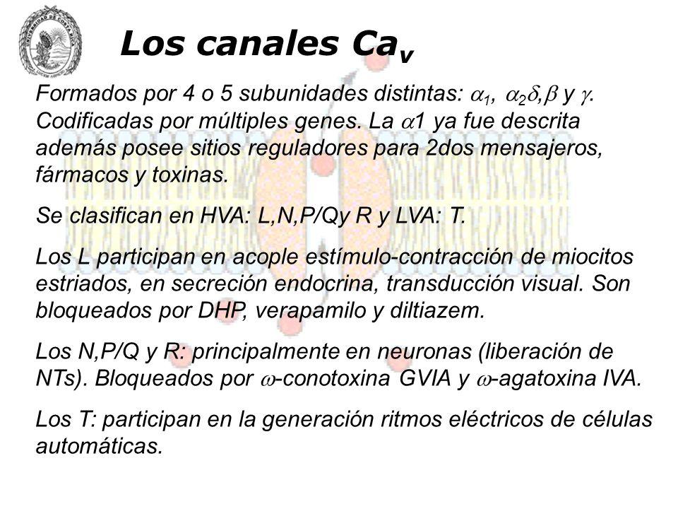Los canales Cav