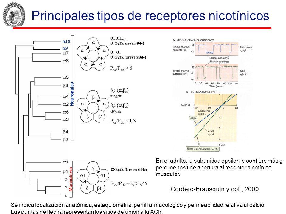 Principales tipos de receptores nicotínicos