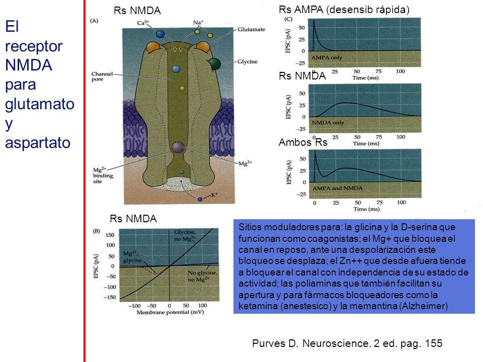 El receptor NMDA para glutamato y aspartato