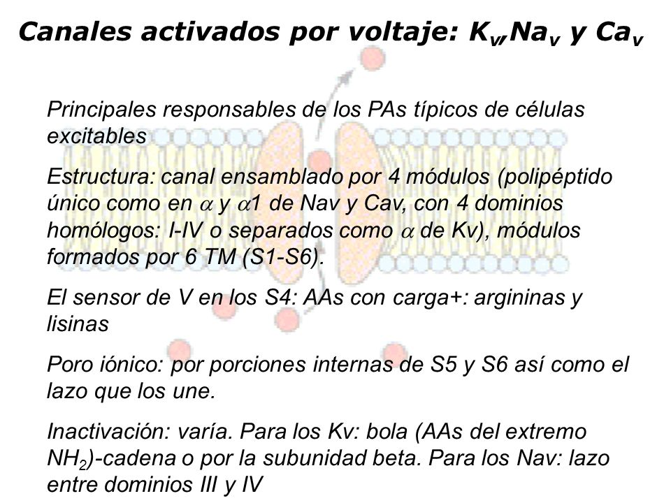 Canales activados por voltaje: Kv,Nav y Cav