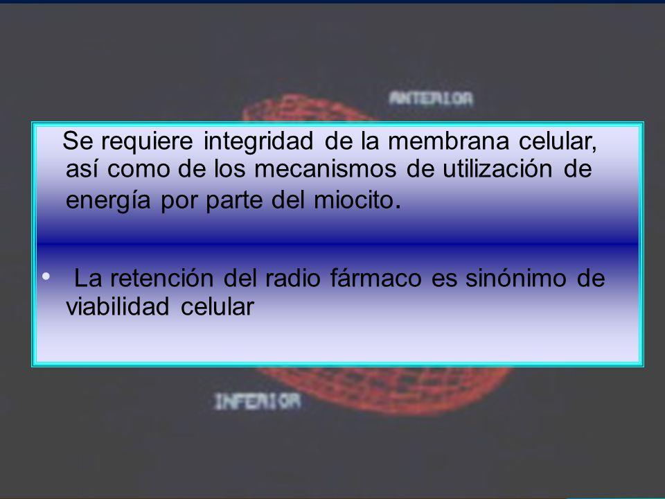 La retención del radio fármaco es sinónimo de viabilidad celular