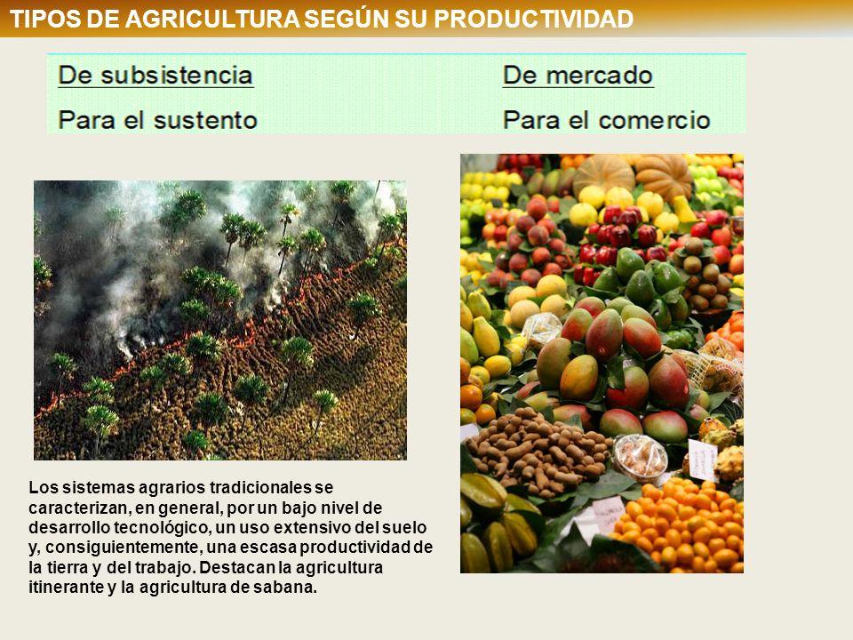 TIPOS DE AGRICULTURA SEGÚN SU PRODUCTIVIDAD