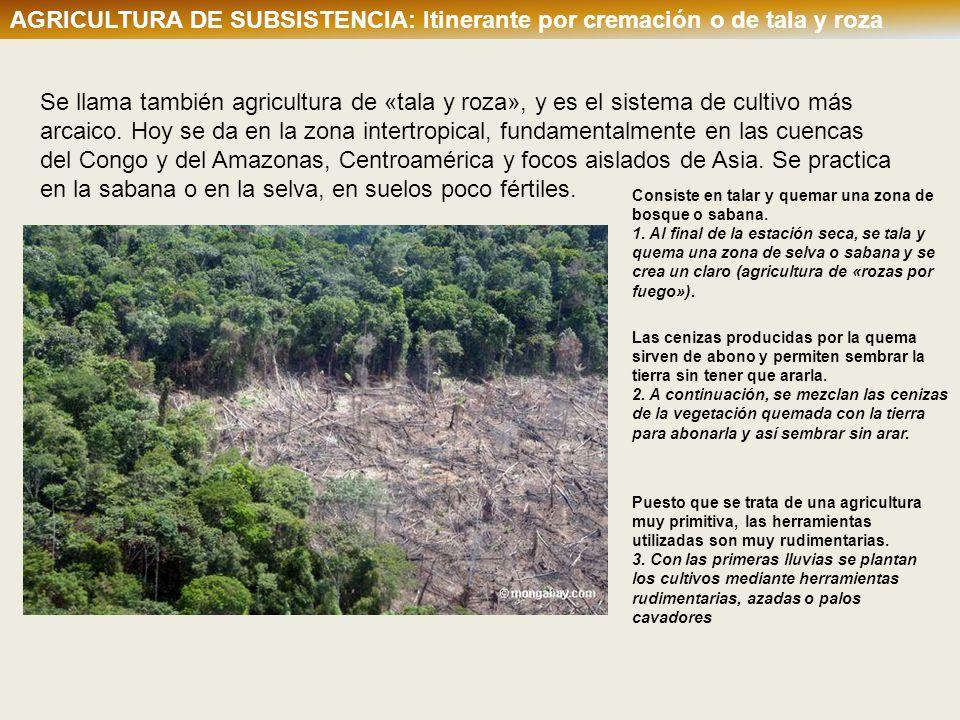 AGRICULTURA DE SUBSISTENCIA: Itinerante por cremación o de tala y roza