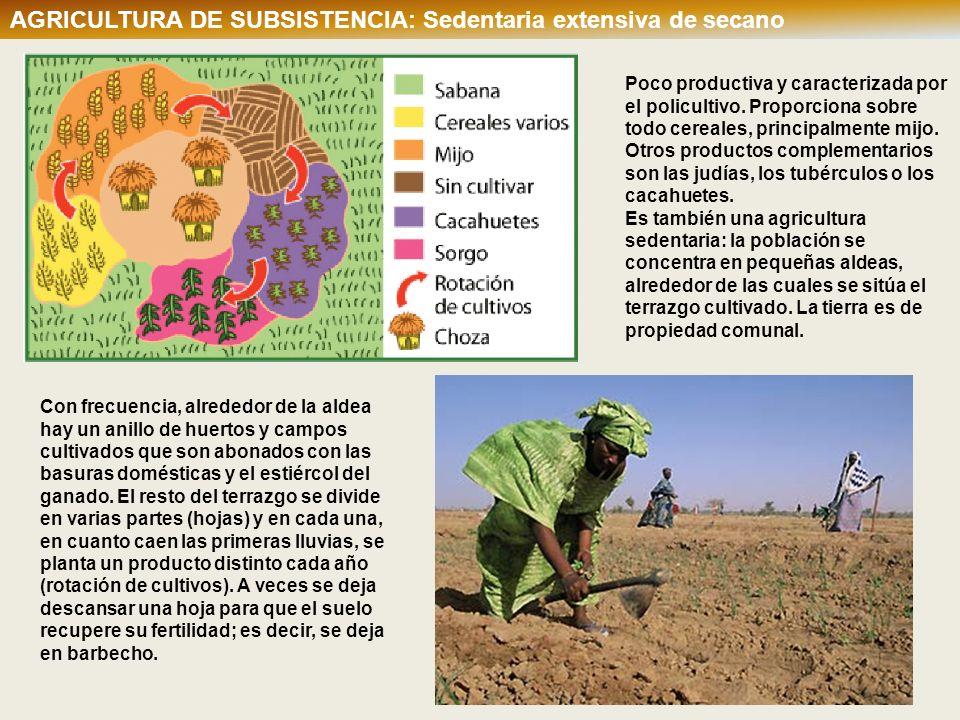 AGRICULTURA DE SUBSISTENCIA: Sedentaria extensiva de secano