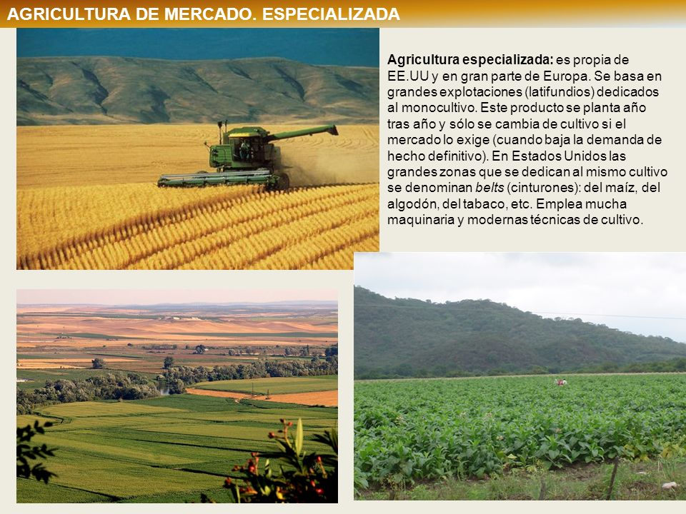 AGRICULTURA DE MERCADO. ESPECIALIZADA