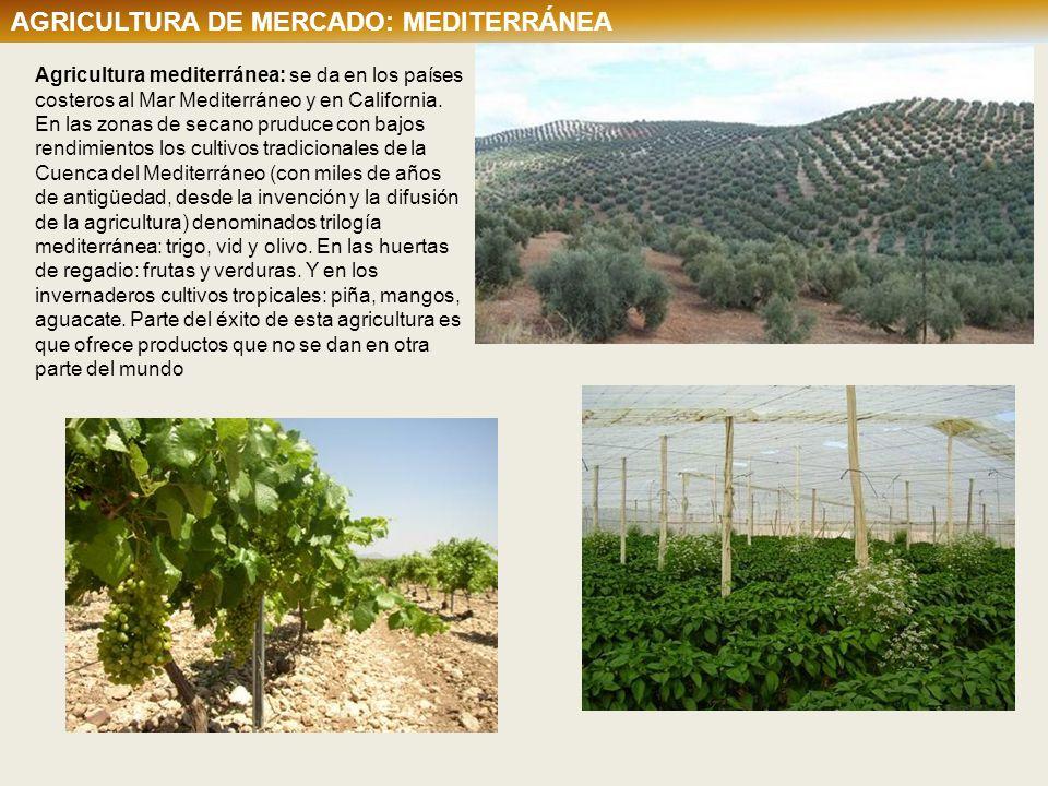 AGRICULTURA DE MERCADO: MEDITERRÁNEA