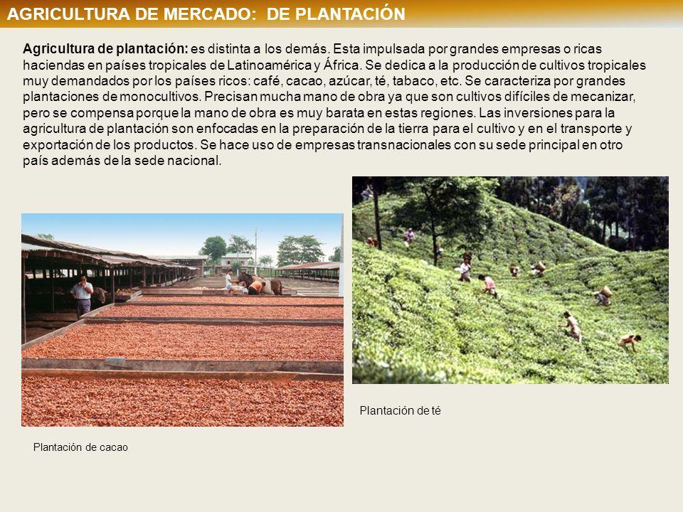 AGRICULTURA DE MERCADO: DE PLANTACIÓN