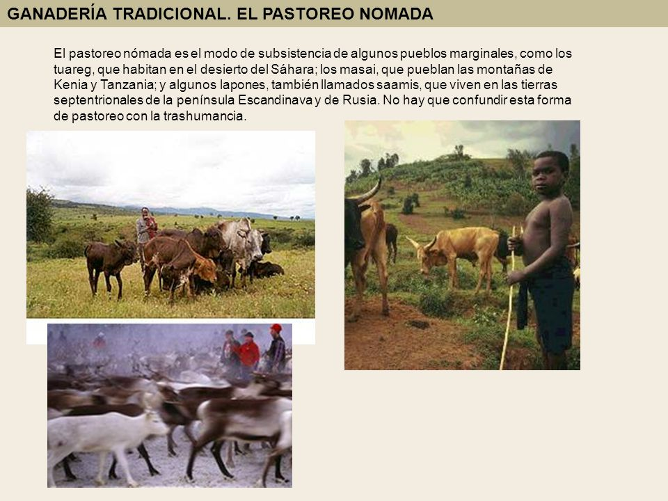 GANADERÍA TRADICIONAL. EL PASTOREO NOMADA