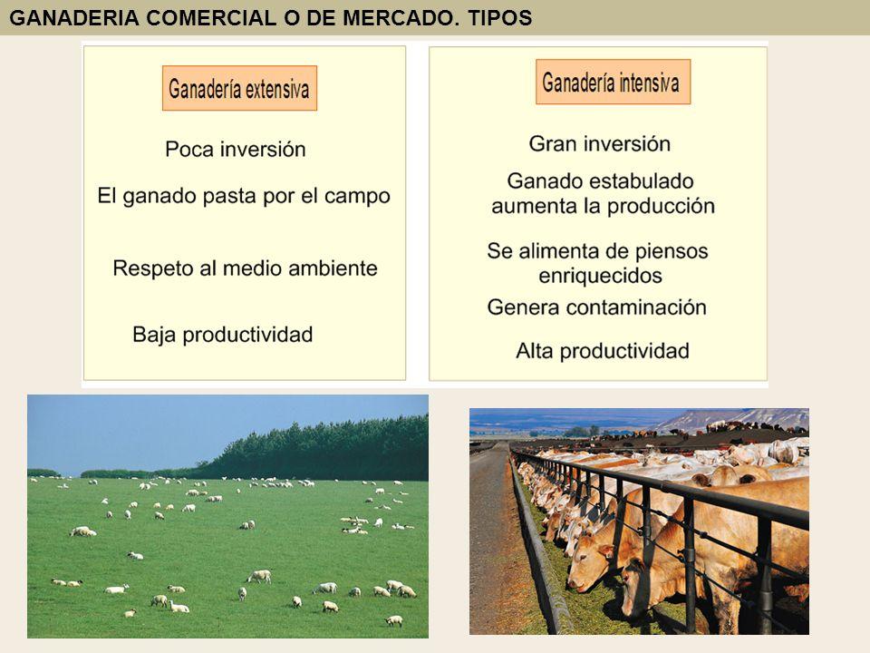 GANADERIA COMERCIAL O DE MERCADO. TIPOS