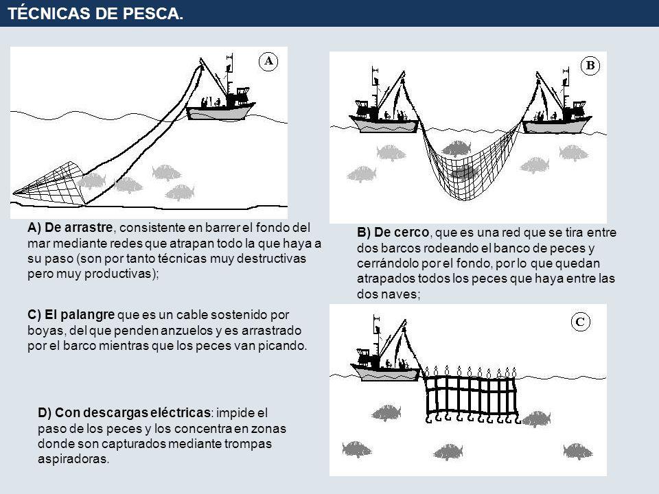 TÉCNICAS DE PESCA.