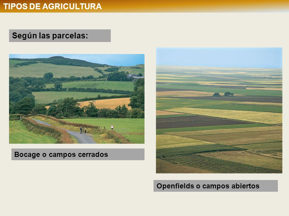 TIPOS DE AGRICULTURA Según las parcelas: TIPOS DE AGRICULTURA
