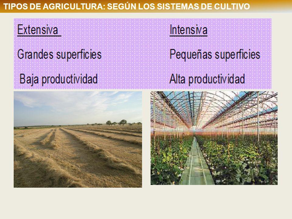 TIPOS DE AGRICULTURA: SEGÚN LOS SISTEMAS DE CULTIVO