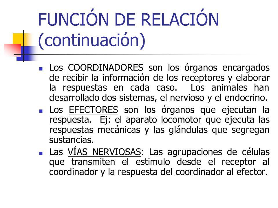 FUNCIÓN DE RELACIÓN (continuación)