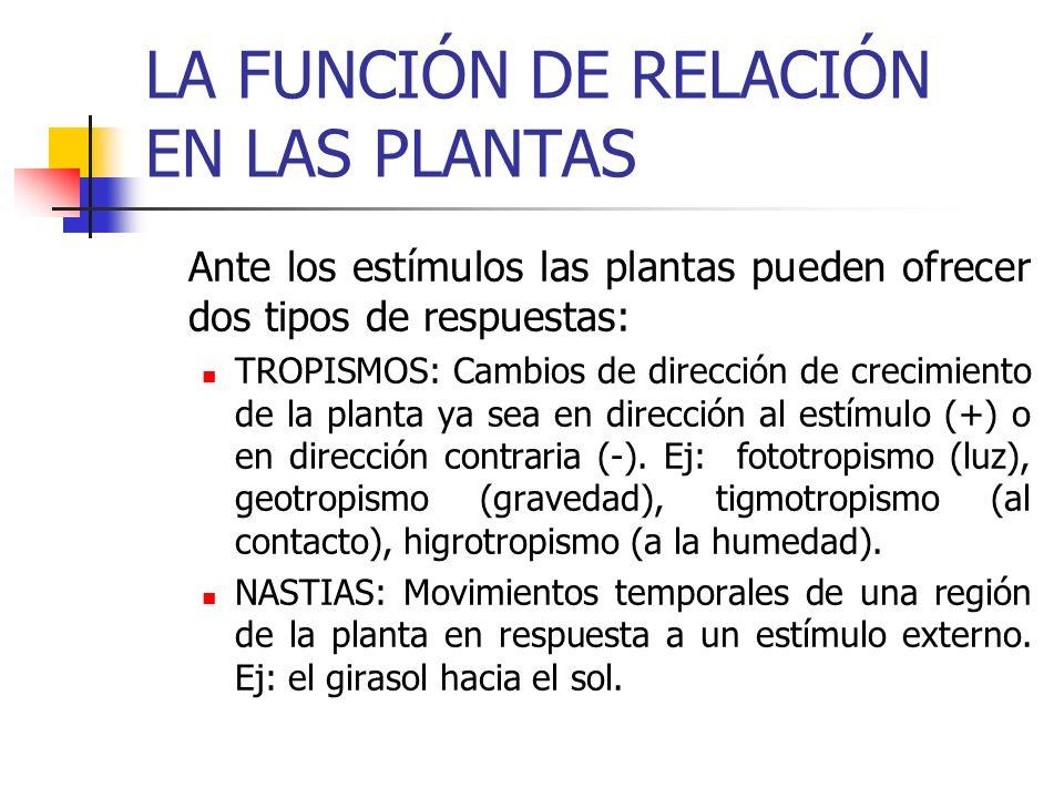LA FUNCIÓN DE RELACIÓN EN LAS PLANTAS