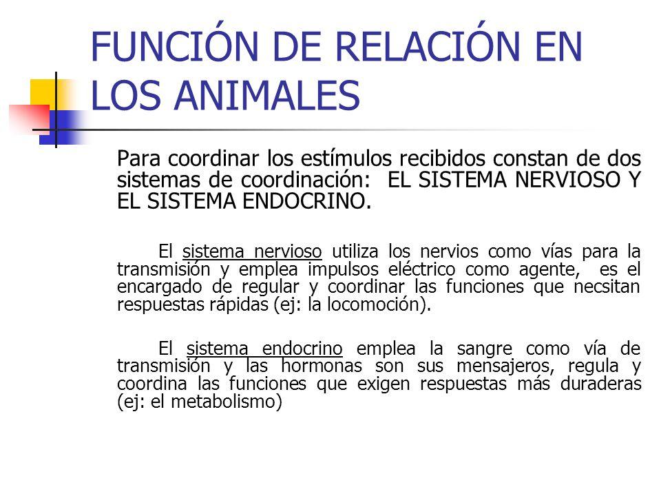 FUNCIÓN DE RELACIÓN EN LOS ANIMALES