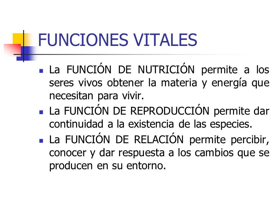 FUNCIONES VITALES La FUNCIÓN DE NUTRICIÓN permite a los seres vivos obtener la materia y energía que necesitan para vivir.