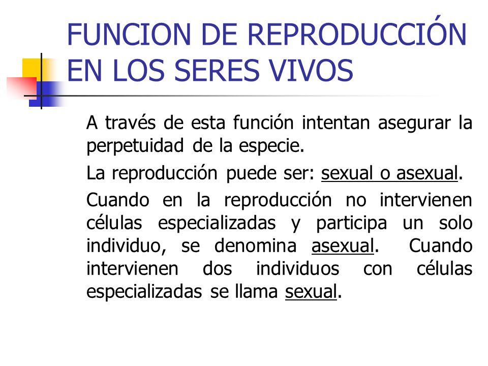 FUNCION DE REPRODUCCIÓN EN LOS SERES VIVOS