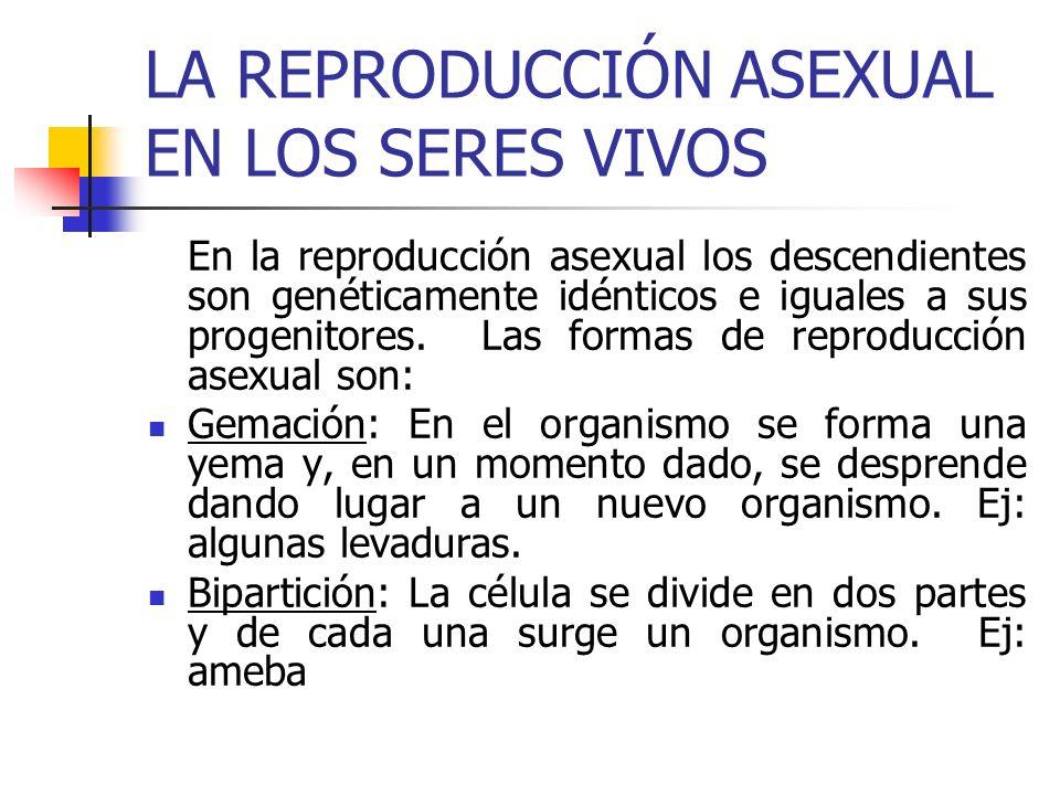 LA REPRODUCCIÓN ASEXUAL EN LOS SERES VIVOS