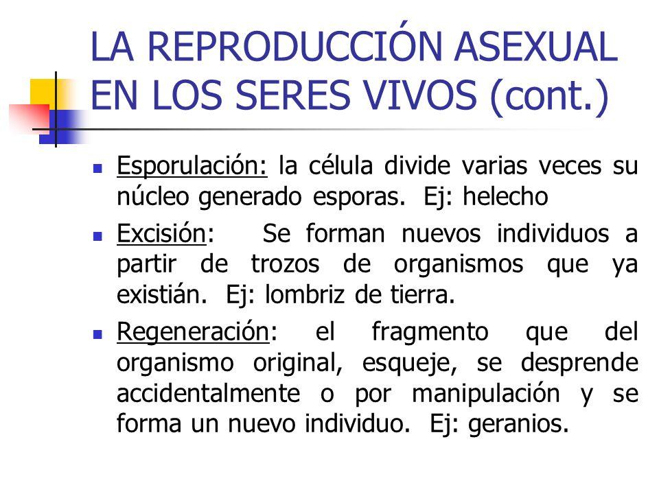 LA REPRODUCCIÓN ASEXUAL EN LOS SERES VIVOS (cont.)